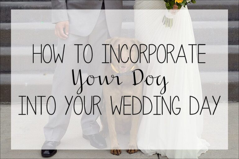 5 Tips On How To Incorporate Your Dog Into Wedding Day By Kara Abbey Photography
